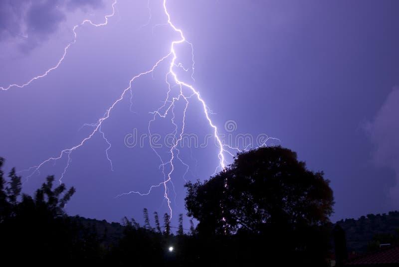 target1472_0_ blisko noc zakorzenia uderzającego drzewa obraz stock