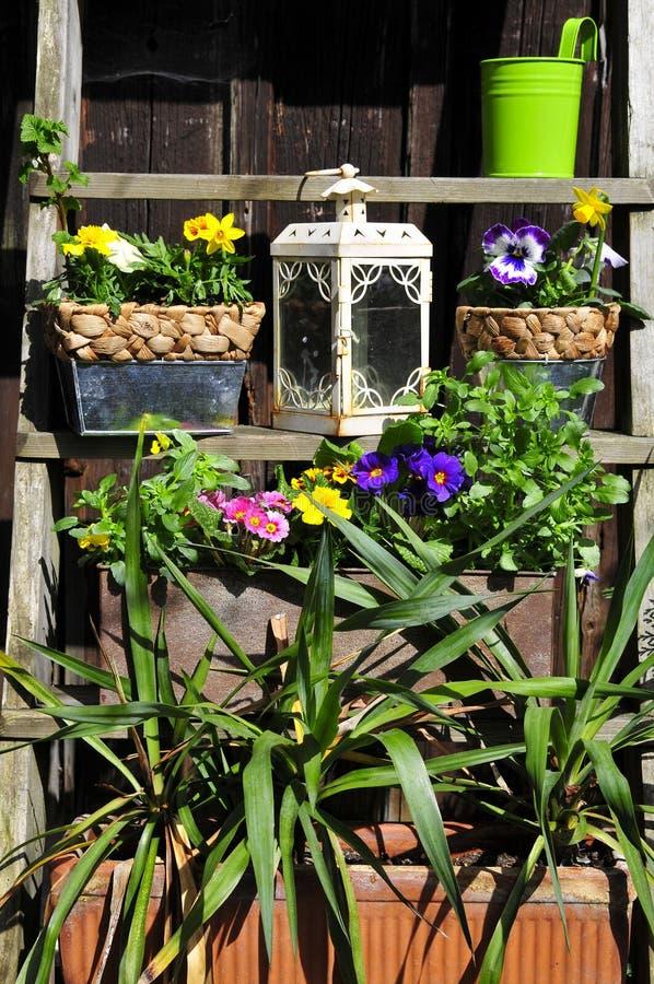 target17_0_ kwiatu ogrodnictwo zdjęcie royalty free
