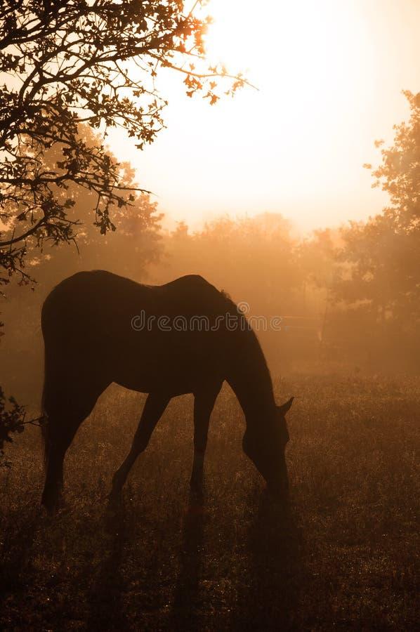 target1932_1_ ciężką końską sylwetkę arabska mgła obraz stock