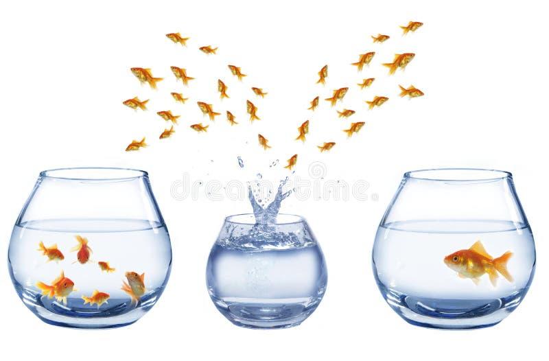 TARGET229_1_ skakać rybiego trzy akwarium i zdjęcie stock