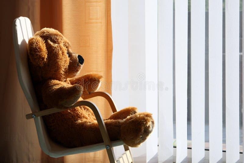 target241_0_ światła słonecznego miś pluszowy niedźwiadkowi childs zdjęcia royalty free