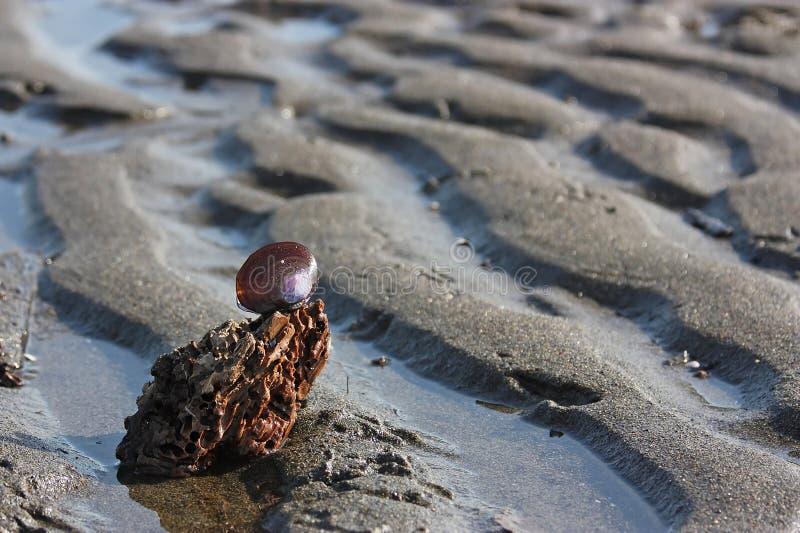 Target2465_0_ Piasek Pluskoczącą Skorupę Plażowe Purpury Fotografia Royalty Free