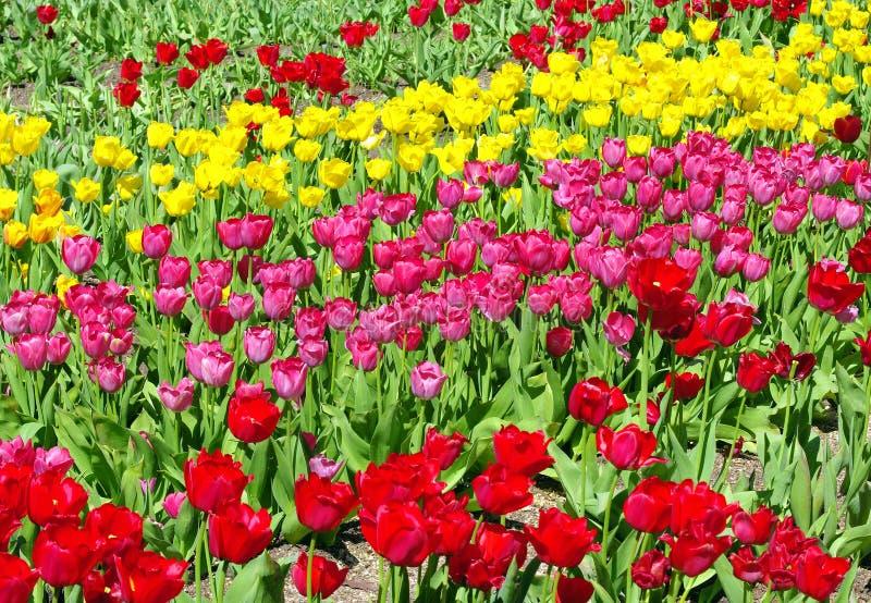 target26_0_ kwiaty fotografia stock