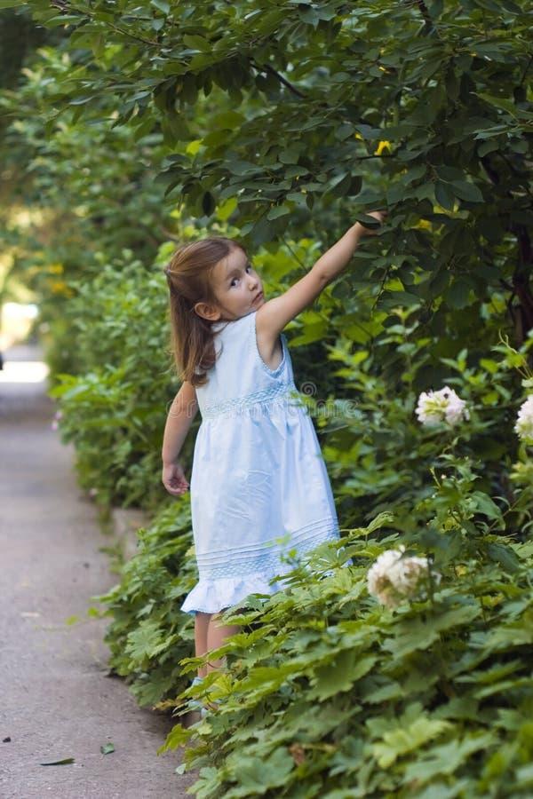 target2849_1_ dzieciaków liść zdjęcie royalty free