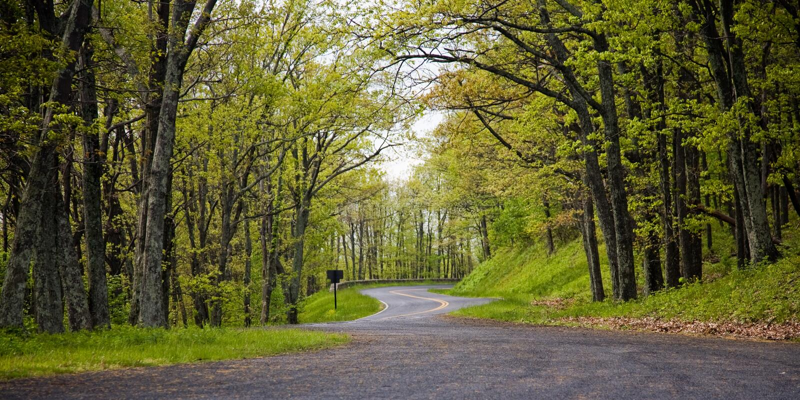 target3726_1_ lasowej drogi wiosna obraz stock