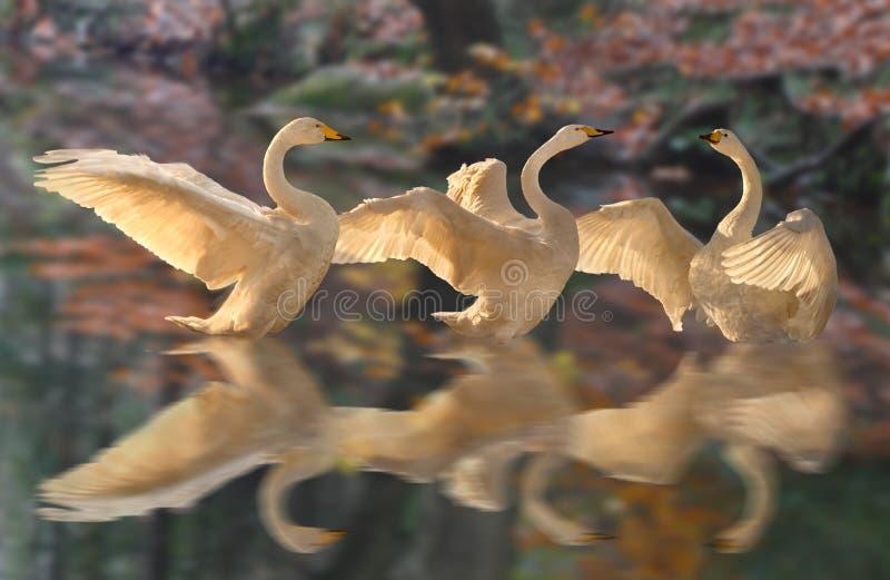 TARGET608_1_ na Jeziorze obrazy royalty free