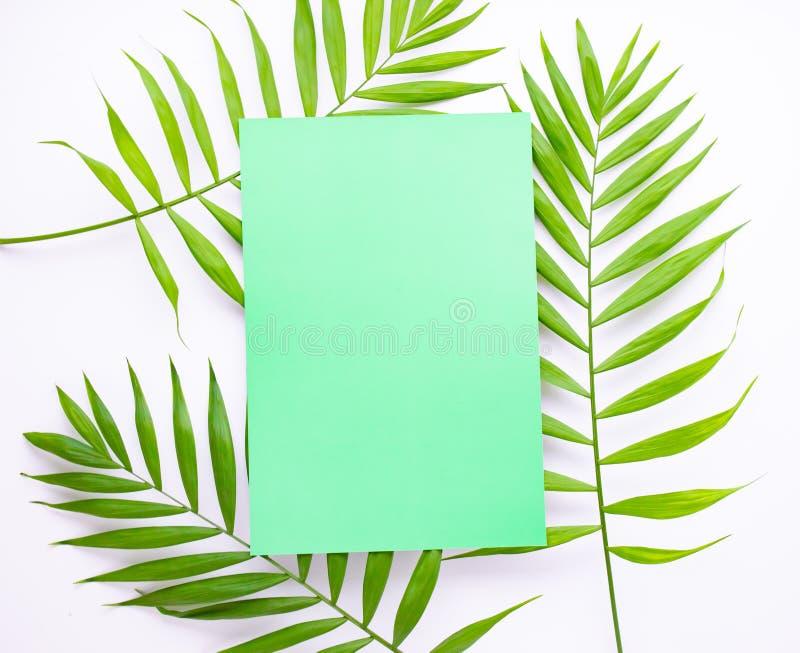 Tarjeta azul en blanco en hojas de palma tropicales, concepto de las vacaciones de verano, disposición de la plantilla para aña foto de archivo libre de regalías