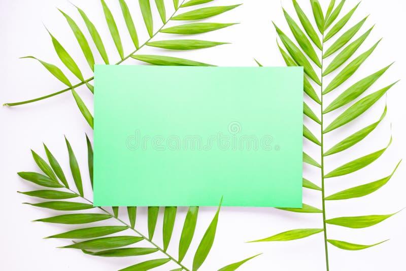 Tarjeta azul en blanco en hojas de palma tropicales, concepto de las vacaciones de verano, disposición de la plantilla para aña imagen de archivo libre de regalías