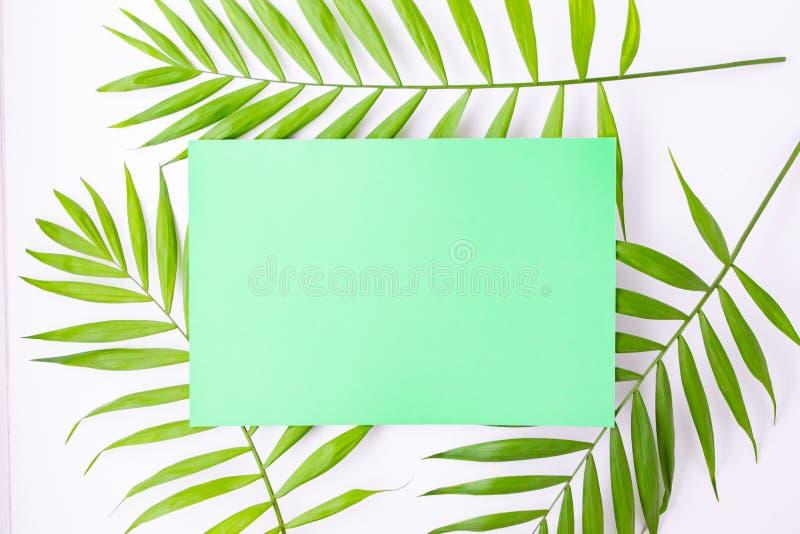 Tarjeta azul en blanco en hojas de palma tropicales, concepto de las vacaciones de verano, disposici?n de la plantilla para a?adi fotografía de archivo