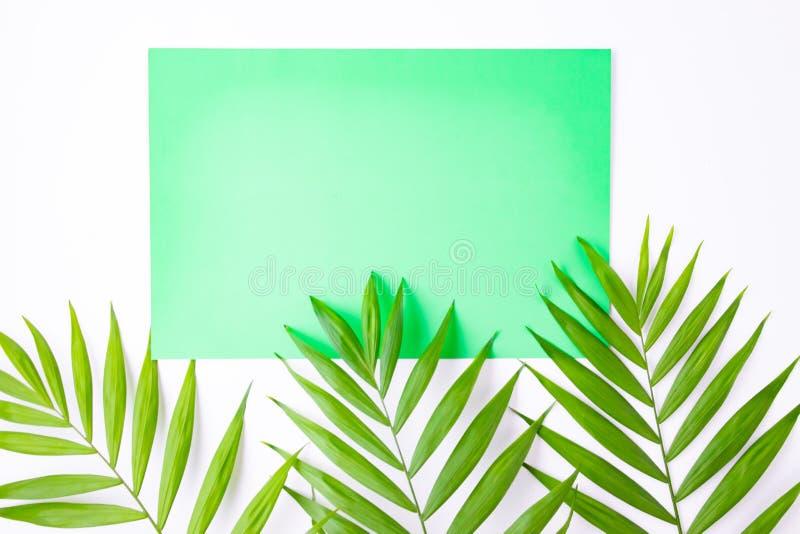 Tarjeta azul en blanco en hojas de palma tropicales, concepto de las vacaciones de verano, disposici?n de la plantilla para a?adi fotos de archivo