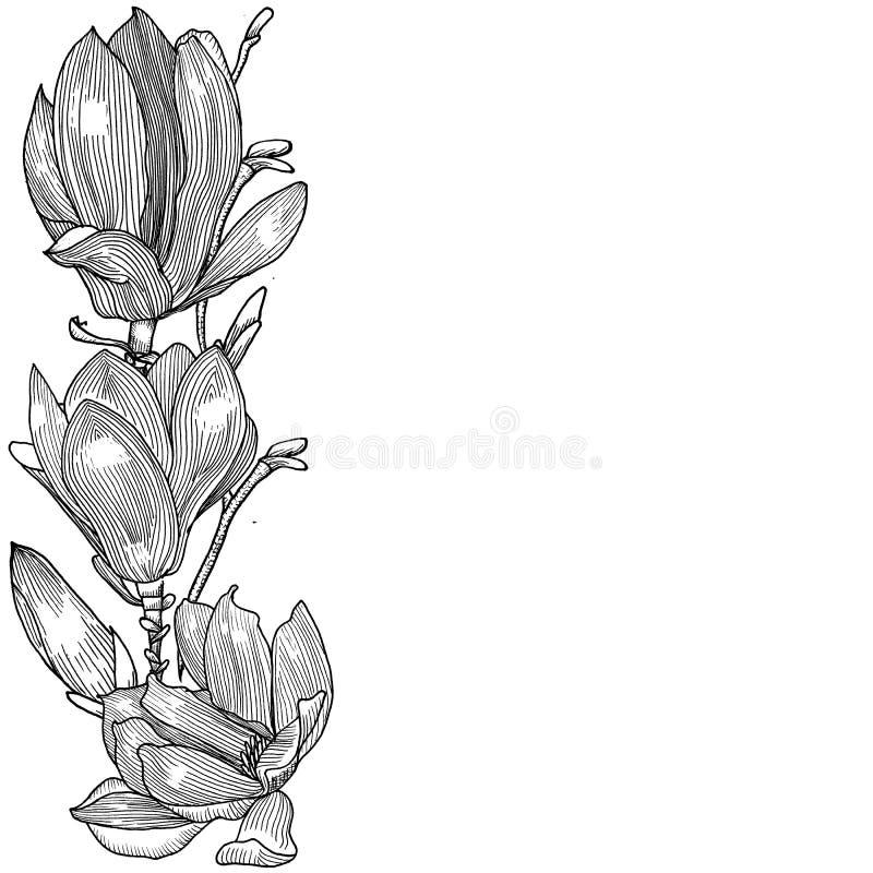 Tarjeta con la magnolia gráficos Mano drenada stock de ilustración