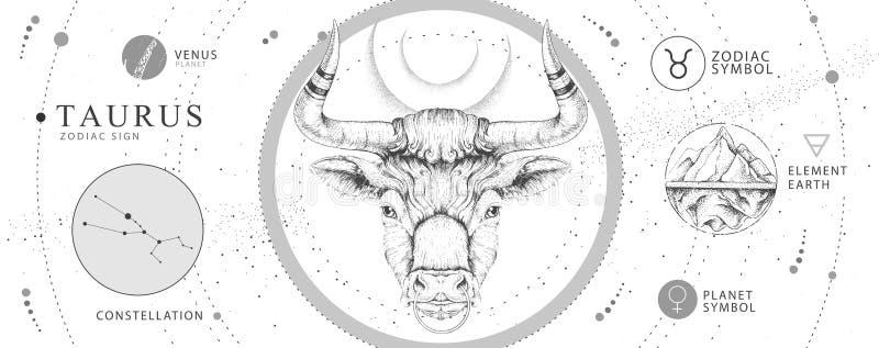 Tarjeta de brujería mágica moderna con signo de astrología Taurus zodiac Cabeza de toro de mano realista ilustración del vector