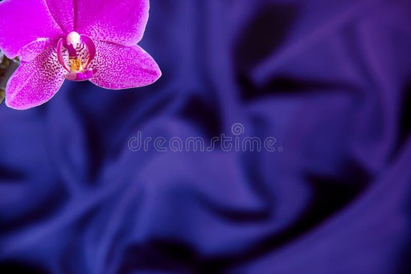 Tarjeta de felicitación con la flor de la orquídea en fondo de la seda del azul real fotos de archivo