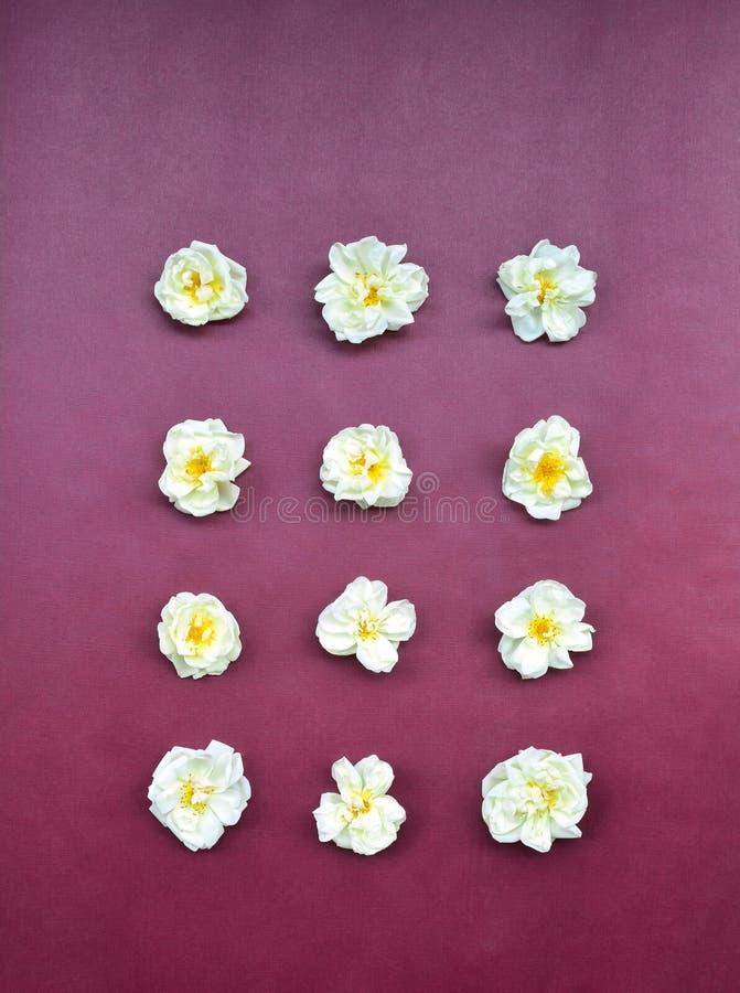Tarjeta de felicitación de las rosas blancas imágenes de archivo libres de regalías