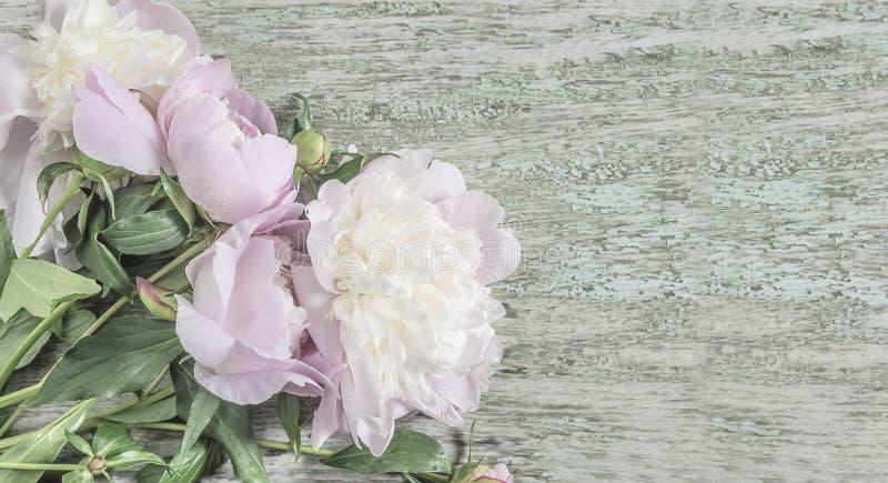 Tarjeta de felicitación hermosa con el manojo de flores rosadas de la peonía imagen de archivo