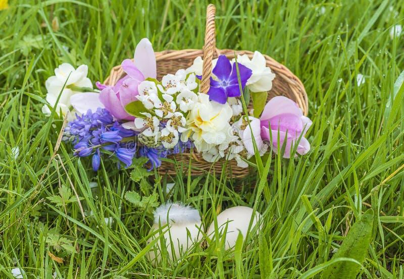 Tarjeta de felicitación hermosa de pascua con la cesta de mimbre, flor de la primavera fotografía de archivo libre de regalías