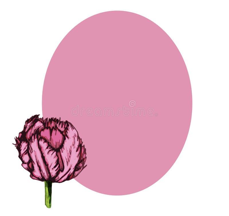 Tarjeta de felicitación púrpura del tulipán con la pierna oval-05 stock de ilustración