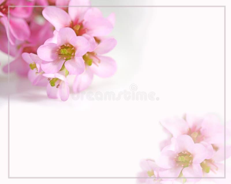 Felicitaciones De Cumpleaños Con Flores: Tarjeta De Felicitaciones Con Las Flores Imagen De Archivo