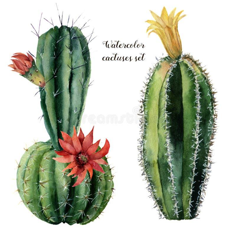 Tarjeta de la acuarela con el cactus y las flores verdes Cirio pintado a mano con la flor roja y amarilla aislada en blanco ilustración del vector