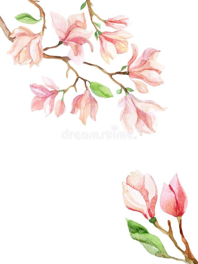 Tarjeta de la acuarela de la magnolia en el fondo blanco stock de ilustración