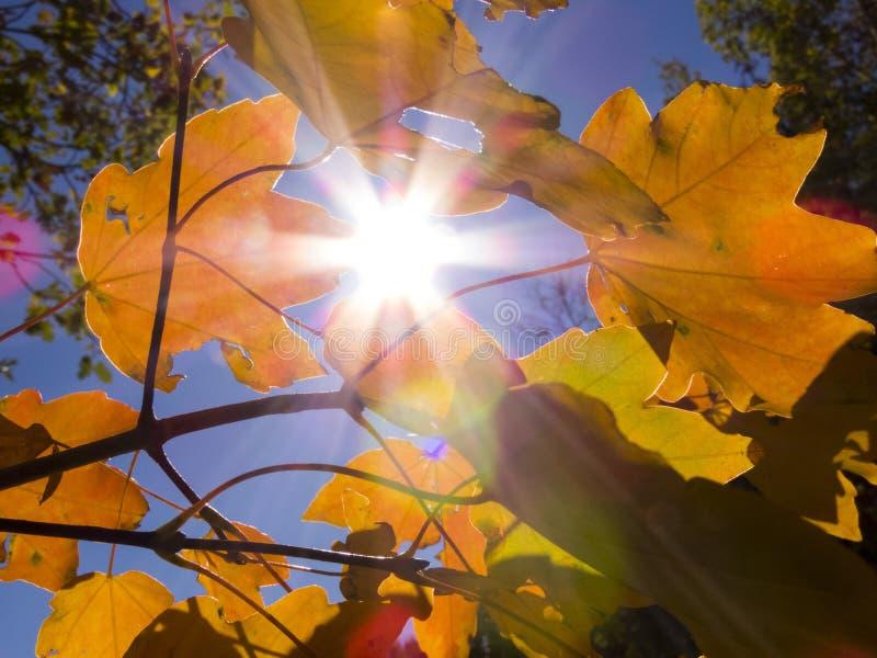 Tarjeta de la tarjeta de la tarjeta del otoño leaves_2 del sol del otoño fotografía de archivo libre de regalías