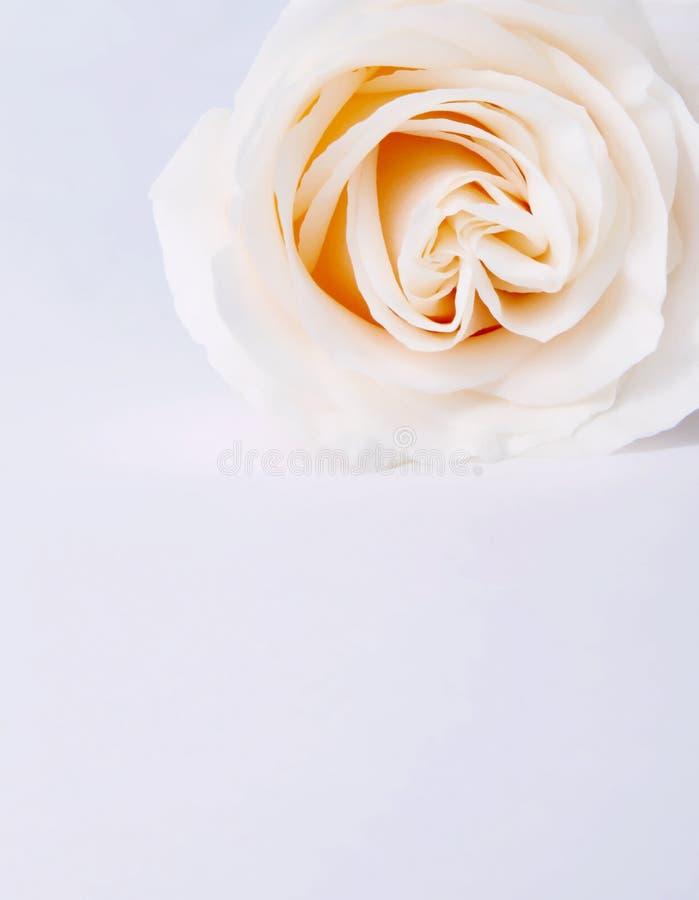 Tarjeta de la flor fotos de archivo