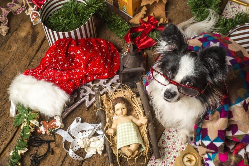 Tarjeta de Navidad divertida del perro fotografía de archivo libre de regalías