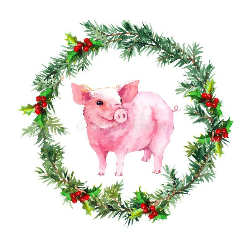 Tarjeta de Navidad - ramitas del abeto, muérdago, cerdo precioso watercolor stock de ilustración