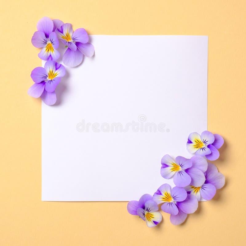 Tarjeta de papel en blanco del cuadrado con las flores violetas salvajes en fondo amarillo en colores pastel Visi?n superior, com foto de archivo