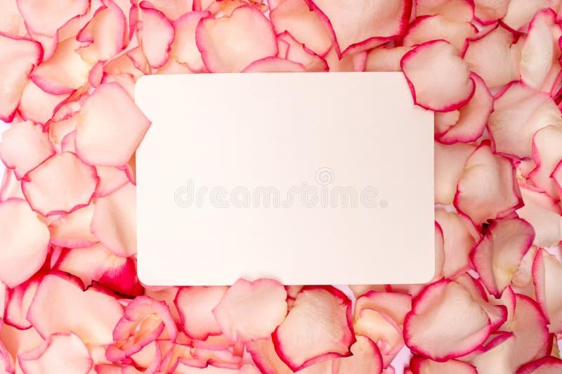 Tarjeta de papel en blanco en rosas rosadas de los pétalos Concepto mujer día 8 de marzo internacional, el día de tarjeta del día fotografía de archivo