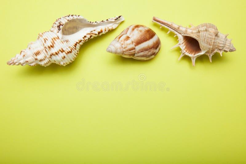 Tarjeta de papel en blanco y conchas marinas en fondo amarillo Copie el espacio fotografía de archivo