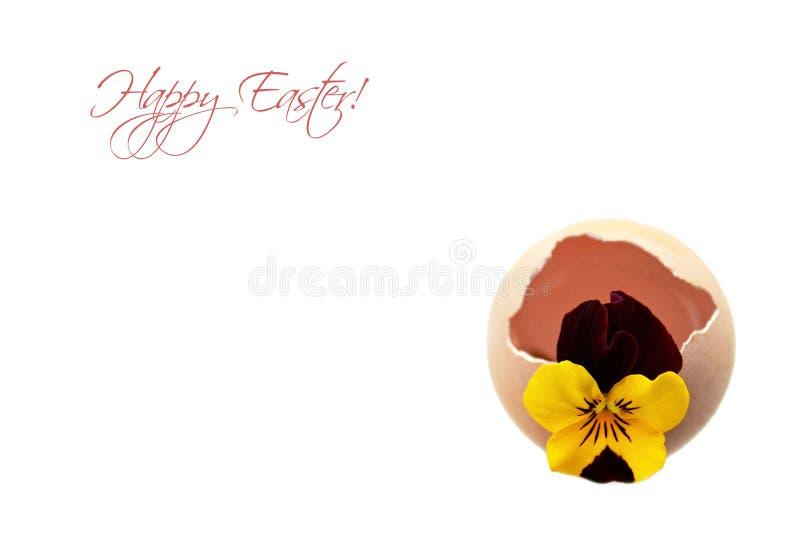 Tarjeta de pascua feliz con la flor en cáscara de huevo imagen de archivo libre de regalías