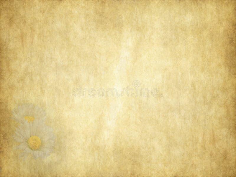 Tarjeta del día de fiesta de las margaritas de la belleza del vintage en el papel viejo libre illustration
