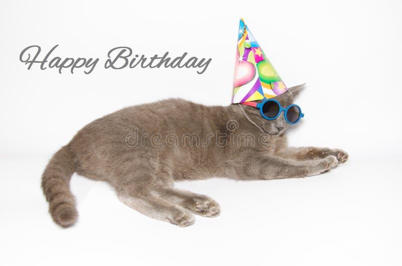 Tarjeta del feliz cumpleaños con el gato divertido imagen de archivo libre de regalías