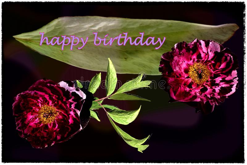Tarjeta del feliz cumpleaños con las peonías rojas que vienen hacia fuera fondo oscuro, letras violetas y hojas verdes fotos de archivo