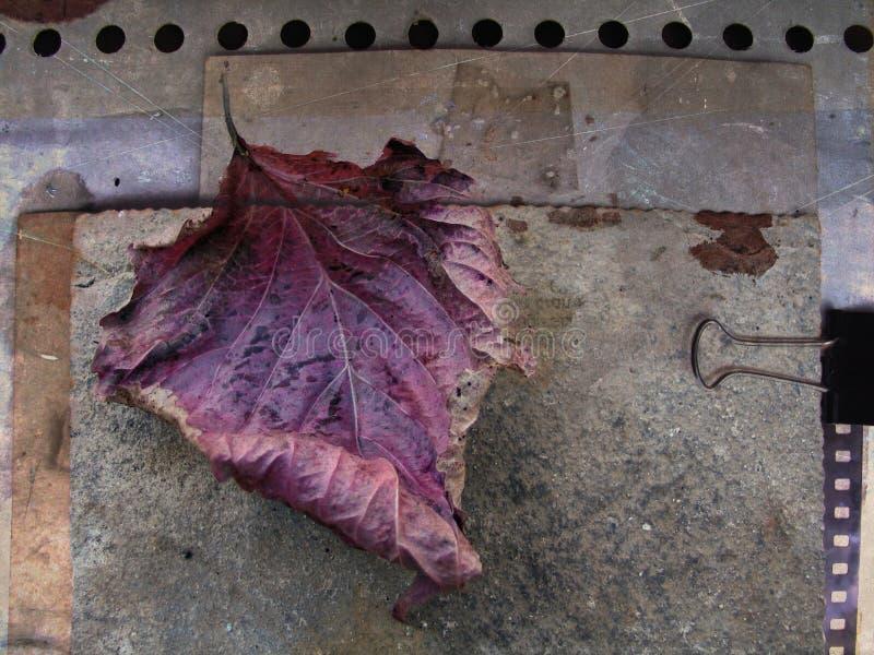Tarjeta del otoño con la hoja caida imágenes de archivo libres de regalías
