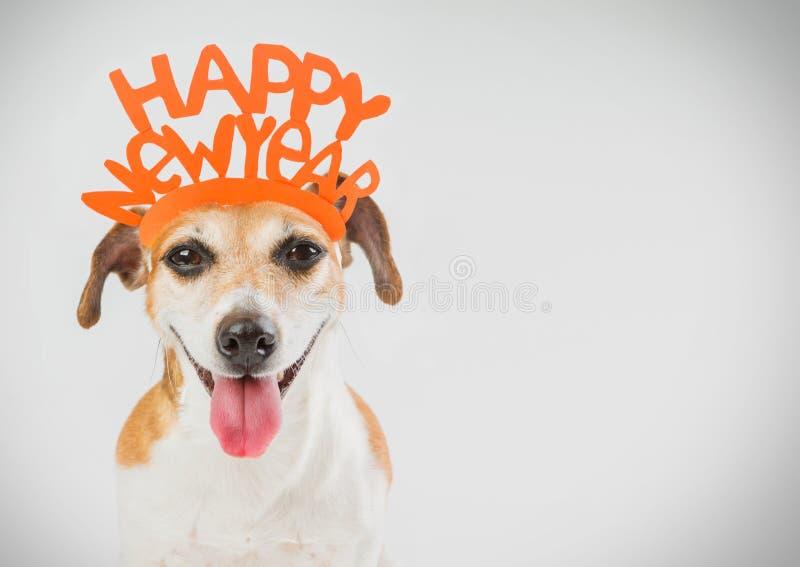Tarjeta del perro del partido de la Feliz Año Nuevo imagen de archivo