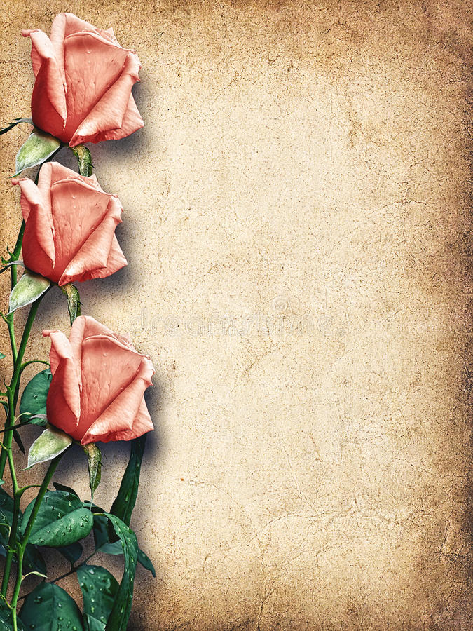 Tarjeta del vintage para la enhorabuena con las rosas rosadas imágenes de archivo libres de regalías