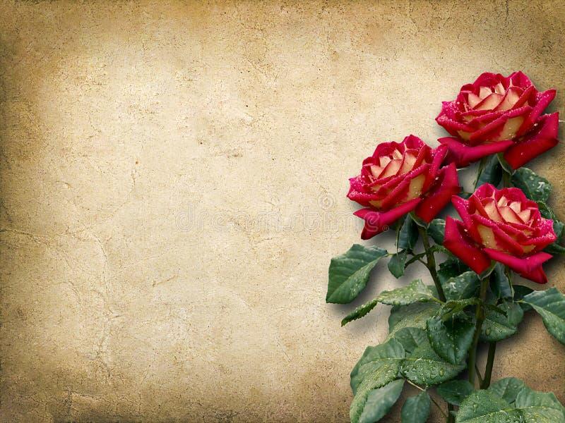 Tarjeta del vintage para la enhorabuena con tres rosas rojas fotos de archivo libres de regalías