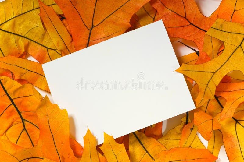 Tarjeta en blanco con las hojas de la caída fotos de archivo