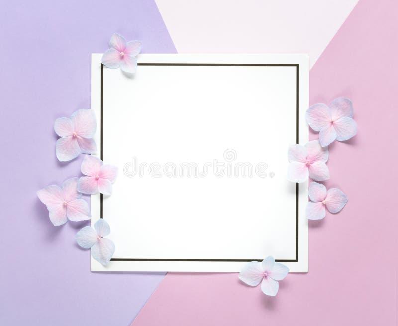 Tarjeta en blanco con los pétalos de la flor en fondo en colores pastel imagenes de archivo