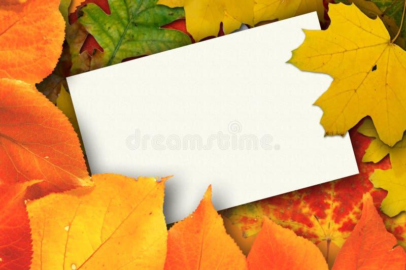 Tarjeta en blanco rodeada por las hojas de otoño hermosas imagen de archivo