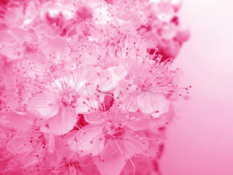 Tarjeta floral atractiva fotos de archivo libres de regalías
