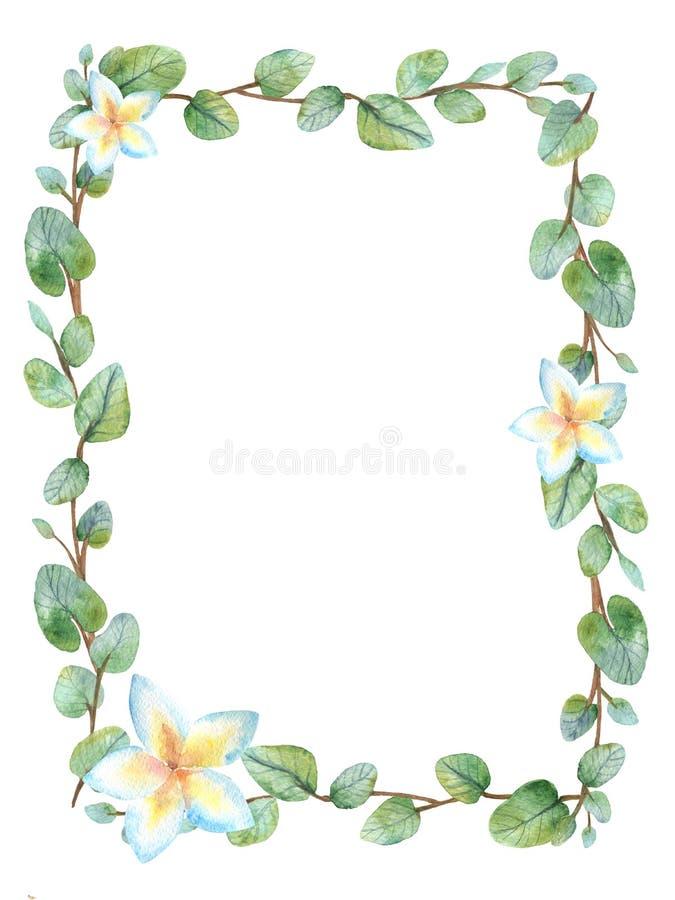 Tarjeta floral verde del marco de la acuarela con las hojas redondas del eucalipto del dólar de plata ilustración del vector