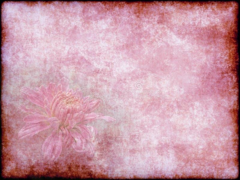 Tarjeta hermosa del día de fiesta del crisantemo del vintage en viejo fondo de papel rosado stock de ilustración