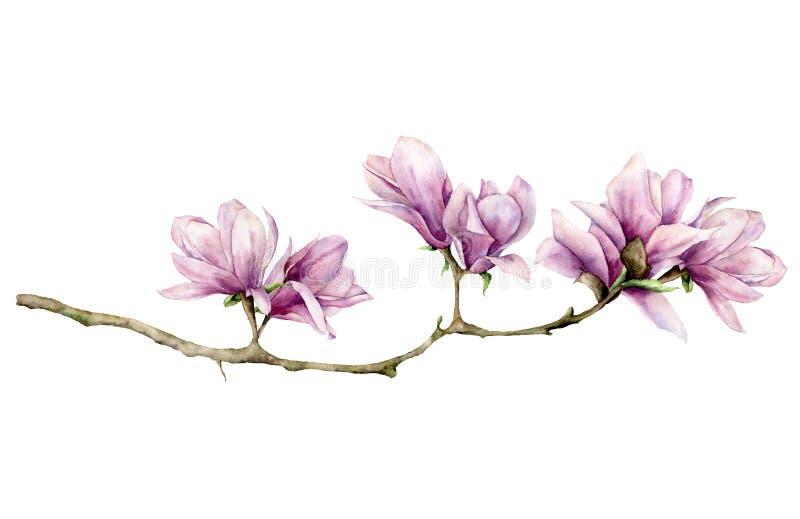 Tarjeta horizontal de la magnolia de la acuarela Flores pintadas a mano en la rama aislada en el fondo blanco Elegante floral stock de ilustración
