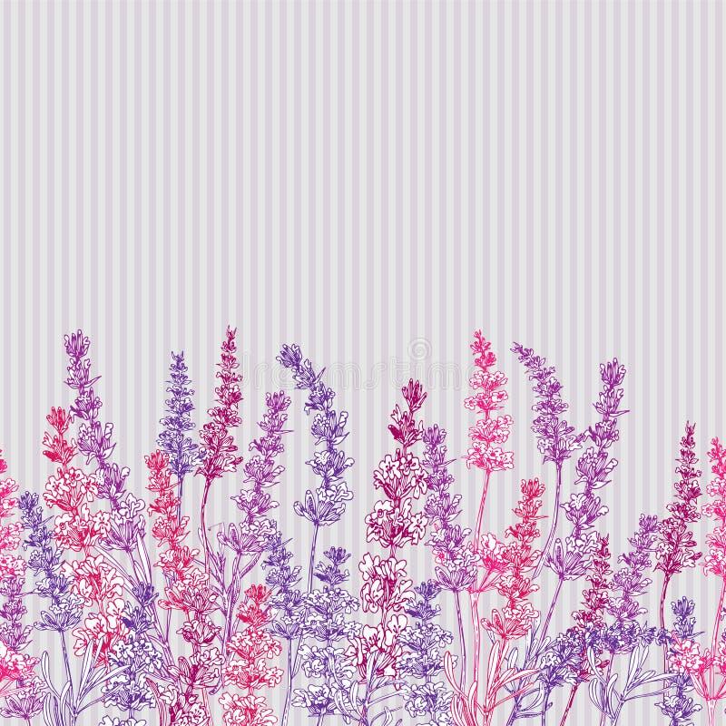 Tarjeta linda con del bosquejo exhausto del color de la mano de la flor de la lavanda y de los arcos lindos aislados en fondo gri ilustración del vector