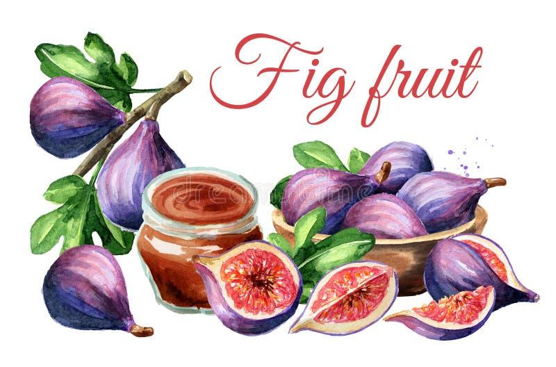 Tarjeta púrpura madura fresca de la fruta del higo Ejemplo dibujado mano de la acuarela aislado en el fondo blanco fotos de archivo libres de regalías