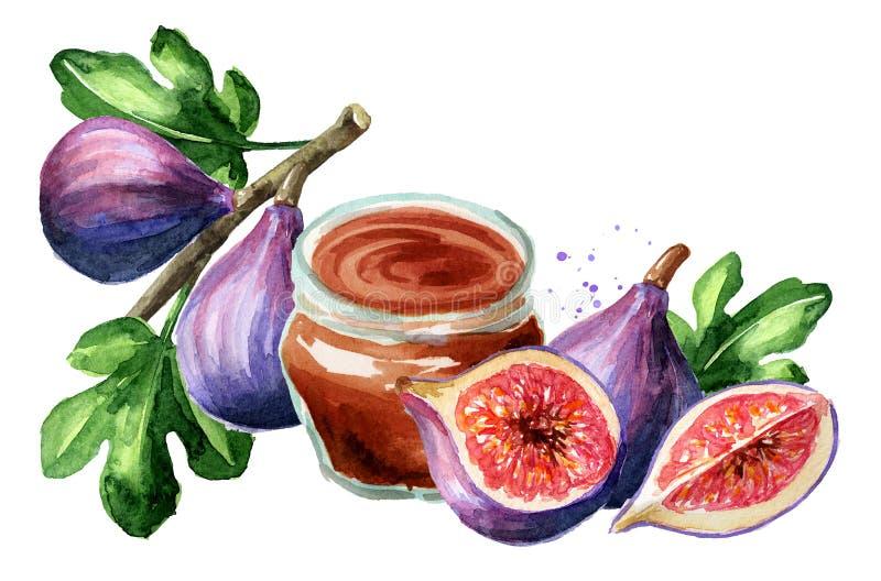 Tarjeta púrpura madura fresca de la fruta del higo Ejemplo dibujado mano de la acuarela, aislado en el fondo blanco fotografía de archivo