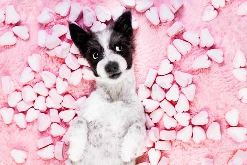 Tarjetas del día de San Valentín color de rosa del amor del perro foto de archivo libre de regalías
